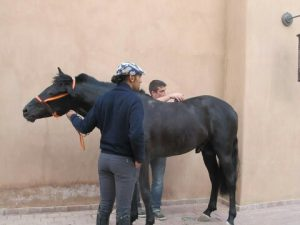 MASSAGES & STRETCHING CHEVAUX